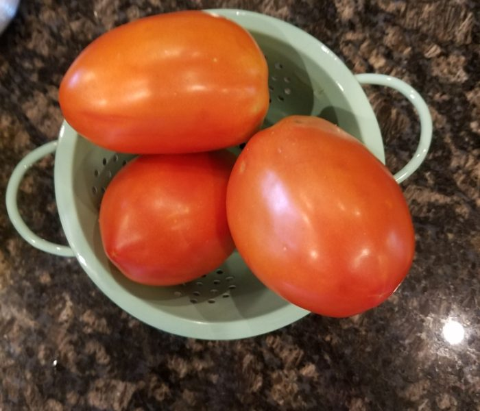 Gladiator Hybrid Paste Tomato